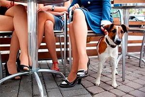 Imperia Referendum per i Cani nei Ristoranti
