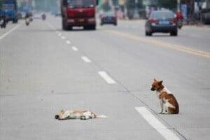 Multato un Pensionato che Investe e Uccide un Cane