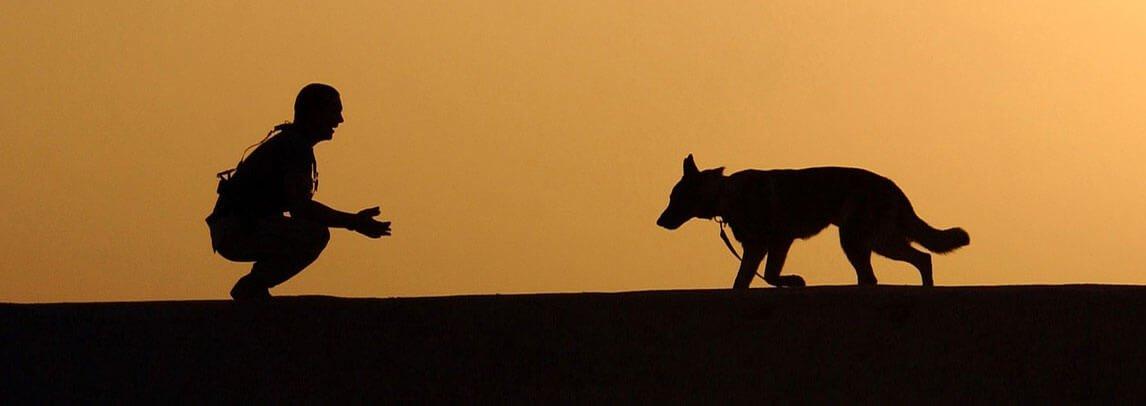 Assicurazione Cane cosa tutela una polizza cane