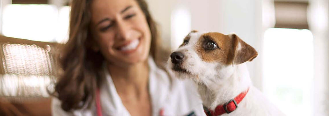 Assicurazione Cane veterinaria con Terrier